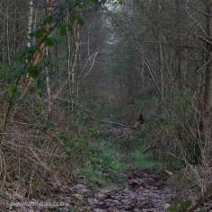 Woodland interior 1