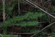 woodland interior moss
