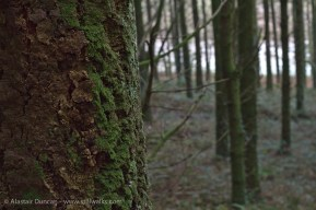 Bumpy bark moss