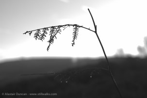frond silhouette