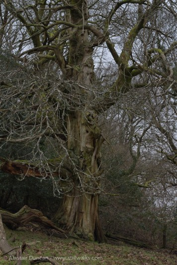 Ageing - stripped of bark