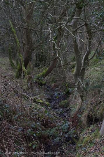 Woodland stream or ditch