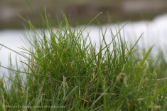 Grassy bank