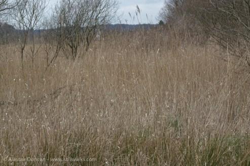 Grass flecks