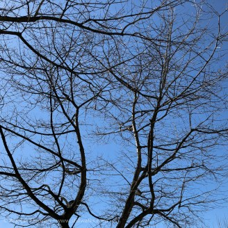 branches against blue