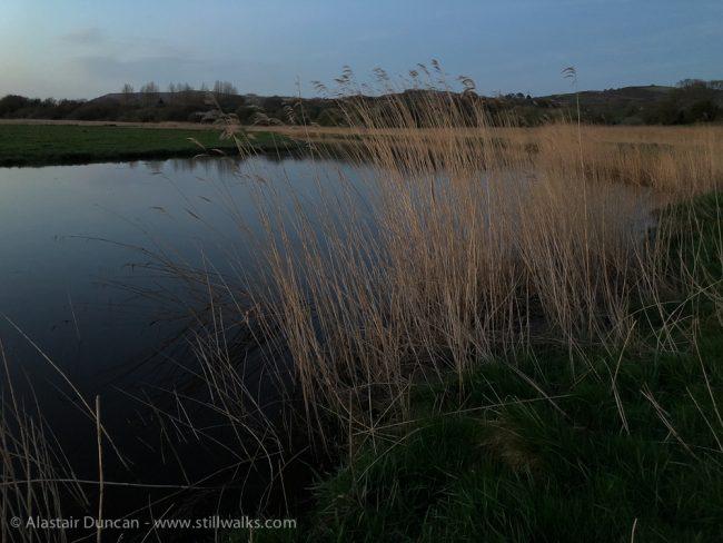 Riverside Marsh Grass