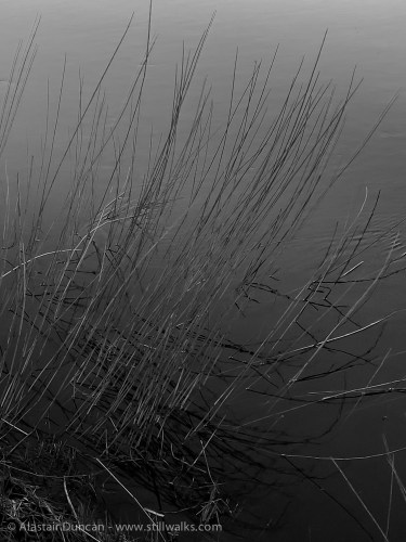 Monochrome Marsh