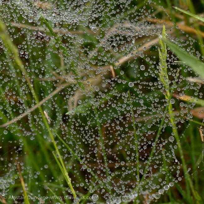 dewey web detail