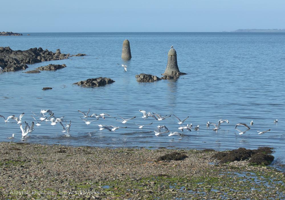 Gulls take off