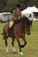 horse show 2