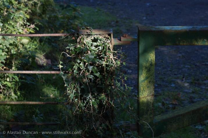 overgrown gate