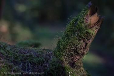 woodland detail