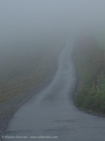 mist and crow
