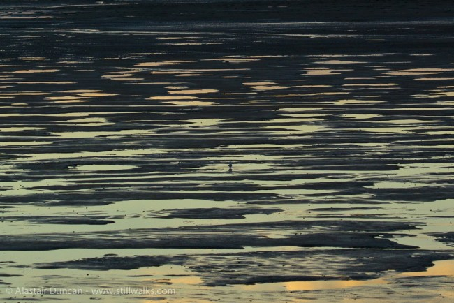 mud flat reflections