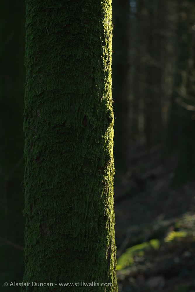 Mossy edge