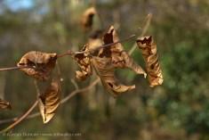 Crinkly leaves