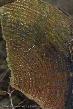tree ring pattern