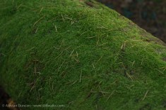 Moss and needles
