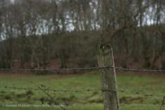 Dantwyn Quarry-3