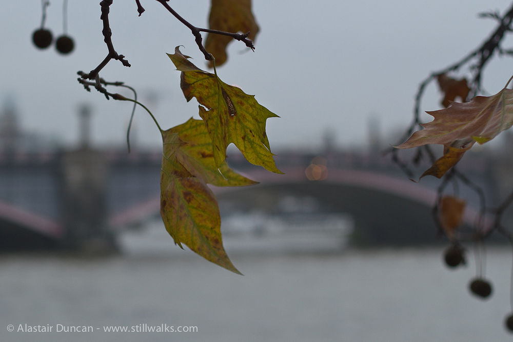 Lambeth Bridge, London