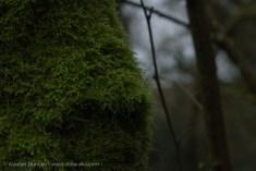 tree trunk moss