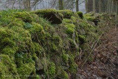 wall of moss