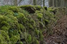 wall of moss