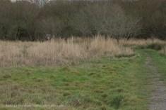 Marshes Churchyard-1