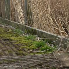 Marshes Churchyard-2