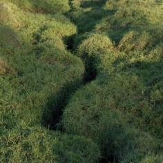 Marshes Churchyard-21