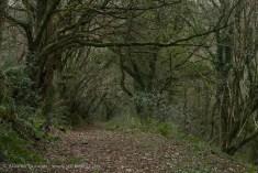 Woodland ravine path