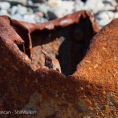 rusty detail