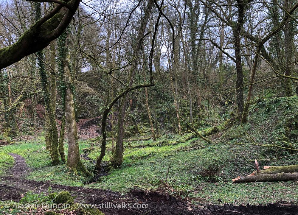 woodland grove