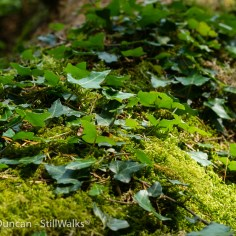 moss and ivy