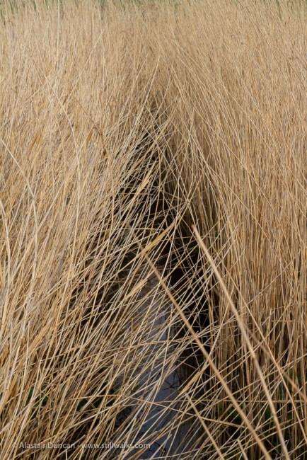 Grassy groove