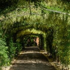pergola tunnel