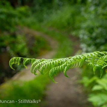 Fern perspective