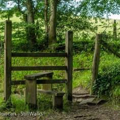 woodland stile