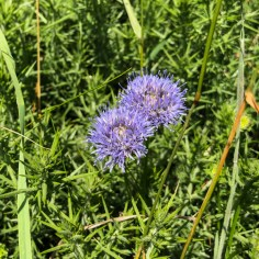 wildflowers 7