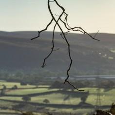 twig against landscape