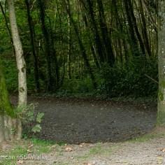 re-entering woods
