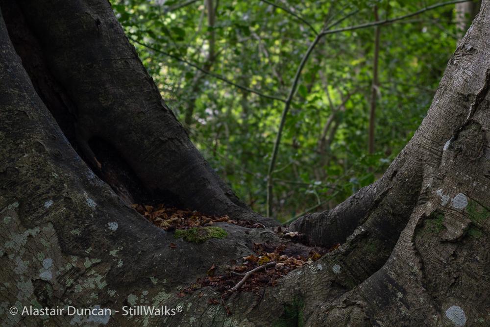 tree elbow