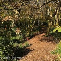 Coedbach Woods