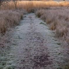 cold marsh path