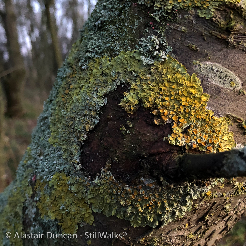 colourful woodland detail