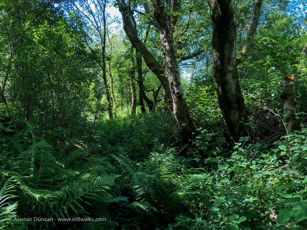cycle path woodland