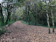 oak wood footpath