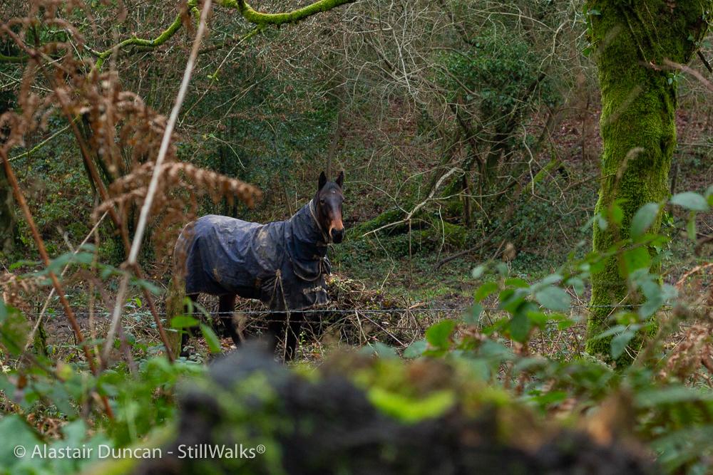 equine observer