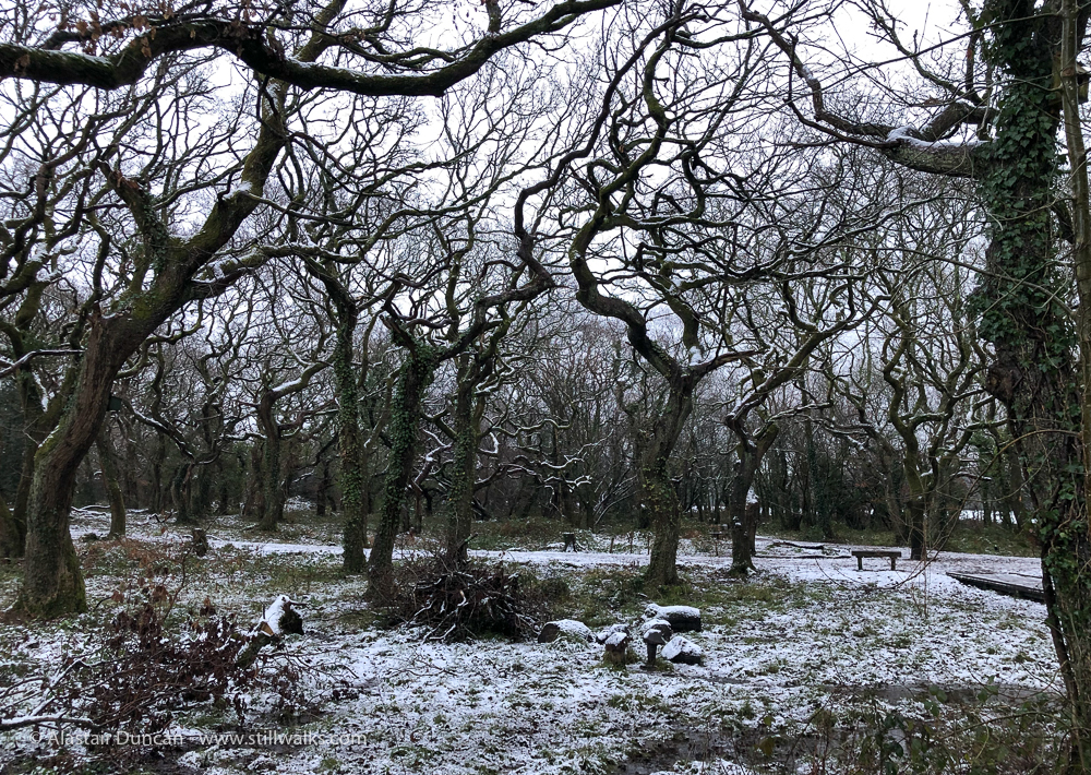 winter oak wood