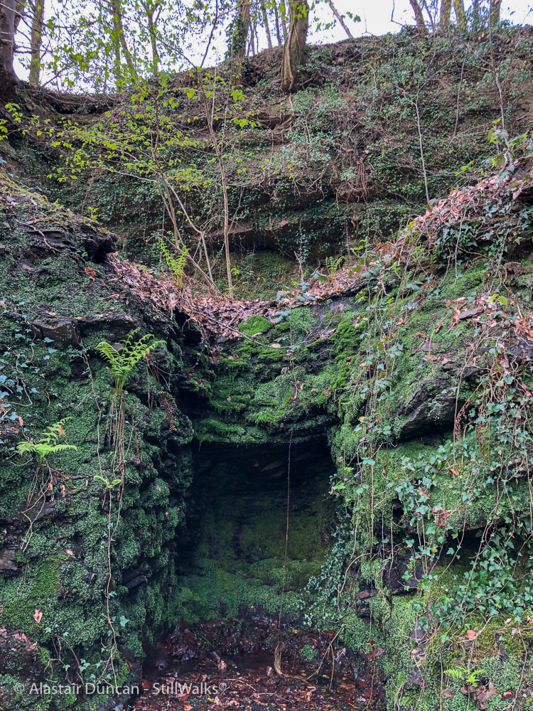 mossy hollow